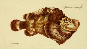 Pistig ou poisson-pierre